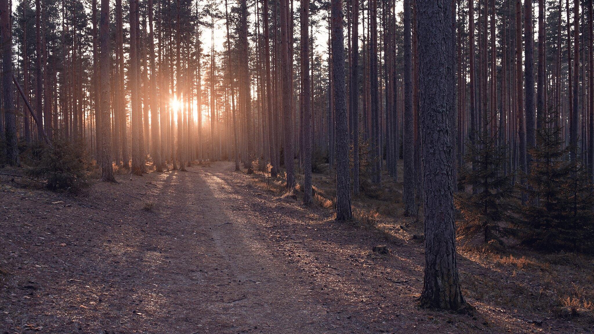 landscape sunset forest