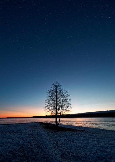 tree landscape stars night yö tähtitaivas puu