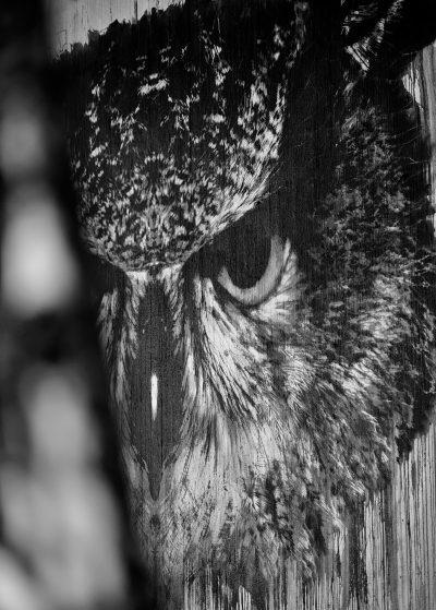 pasila helsinki mustavalkoinen black white streetphoto katukuvaus katutaide streetart art owl pöllö